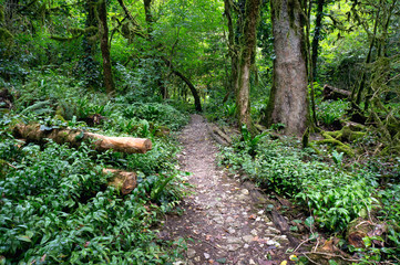 Walking path in forest.