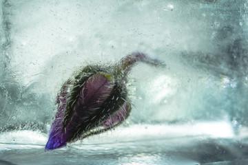 Knospe in Eis eingefroren