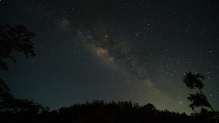 milky way above tree top