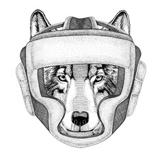 Wolf Dog Wild boxer Boxing animal Sport fitness illutration Wild animal wearing boxer helmet Boxing protection Image for t-shirt, poster, banner