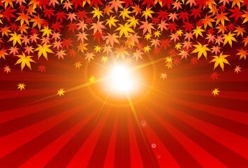 紅葉 秋 太陽 背景