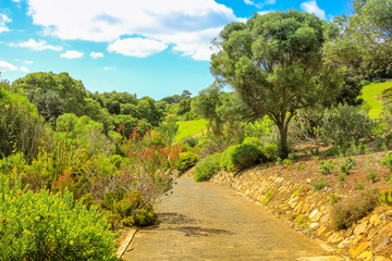 Walkway inside the Kirstenbosch National Botanical Garden in Cape Town, South Africa. Summer season in sunny day.