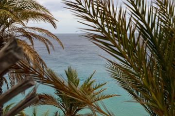 Palmen, Meer, Urlaub