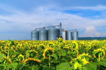 Silo . Field with sunflowers .