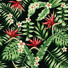 Tropical plants and flowers seamless black background