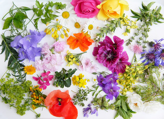 Edible flowers collection isolated on white background. Top view