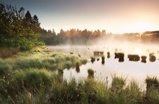 summer sunrise over wild swamp