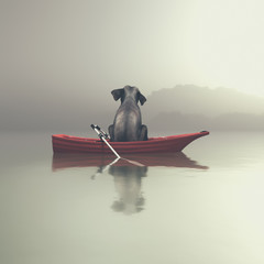 Elephant sitting in a boat by sea.