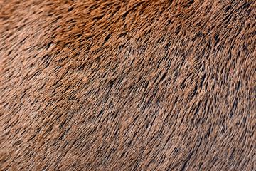 Wall Mural - Deer abstract background fur