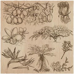 Flowers - An hand drawn vector pack. Line art.