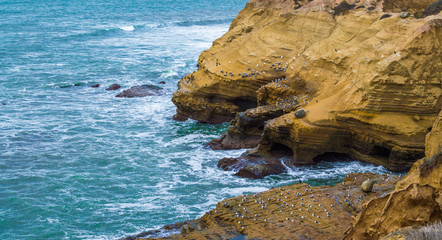 cliffs with seabirds overlooking Pacific ocean at Point Loma San Diego
