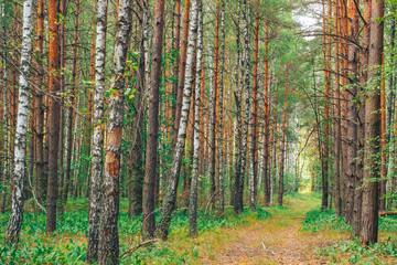 beautiful forest landscape. Ukraine
