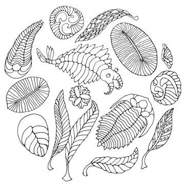 Fauna of Neoproterozoic and Paleozoic Era. Black pen illustration on white background. Anomalocaris, Vendia, Dickinsonia, Charnita, Trilobita.