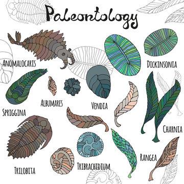 Fauna of Neoproterozoic and Paleozoic Era. Bright illustrations with titles on white background. Anomalocaris, Vendia, Dickinsonia, Charnita, Trilobita.