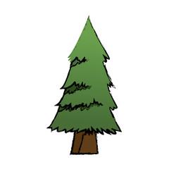 cartoon pine tree natural plant conifer image