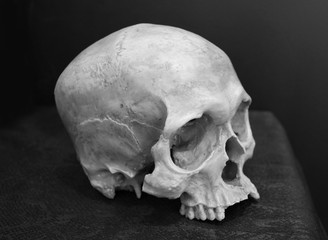 Black and white image of weathered human skull.