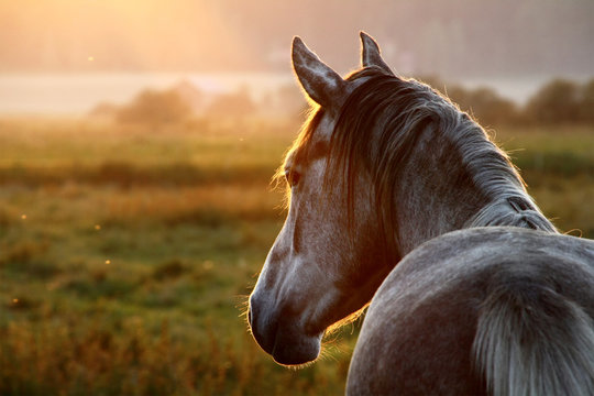 Horse at September Evening