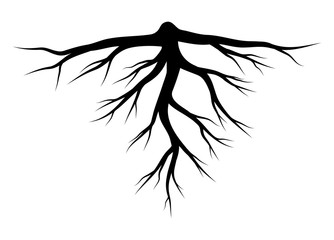 root silhouette vector symbol icon design.