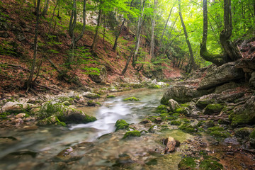 Mountain river in forest and mountain terrain. Crimea, the Grand Canyon. Nature composition.