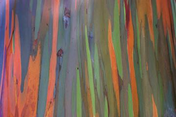 Rainbow tree / Painted Forest on the Hawaiian island of Maui at Mile 7 along the Road to Hana