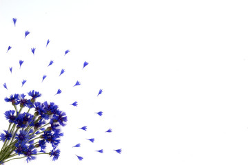 Blue cornflowers frame on white background