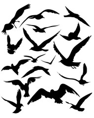 vector set of seagulls silhouettes - black flying birds on white