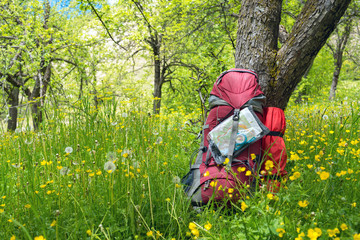 Backpack under a tree among lush grass and dandelions