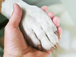 Dog paws and human hand close up. Conceptual image of friendship, trust, love, the help between the person and a dog