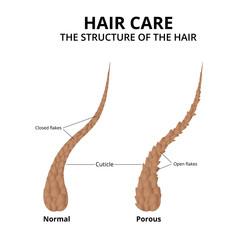 Cuticle of hair close-up