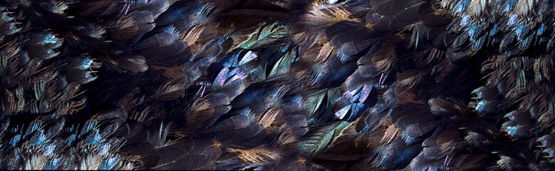 Feathers, textural background .natural black feather with beautiful healthy shine. Natual background suitable for decoration of sites, banners