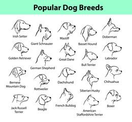 dogs breeds outline portraits, faces