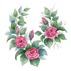 Branches of pink сurly rose on white background. Watercolor illustration.