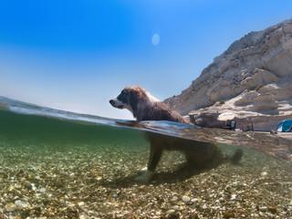 Dog in the water, half underwater