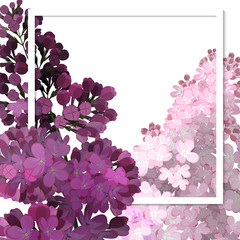 A beautiful frame passing through the flowers of lilac. Vector illustration, white background.