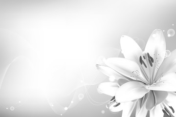 Realistic vector flowers background. Bouquet of white lilies. Isolated vector illustration.