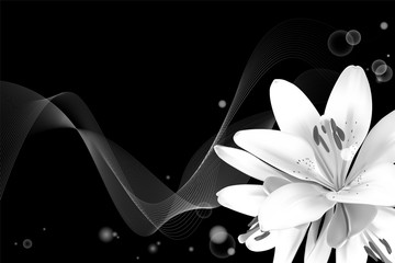 Realistic vector flowers background. Bouquet of white lilies. Isolated vector illustration on black background.