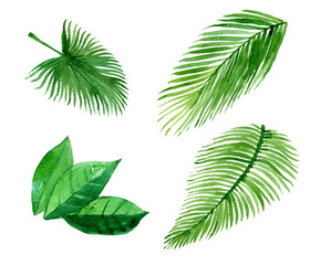 Set of palm leaves, isolated on white background, watercolor illustration