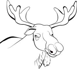 Moose or Eurasian elk line illustration