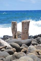 2 Baumstrumpf am Strand Maui