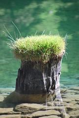 begraster Baumstrumpf in Bergsee
