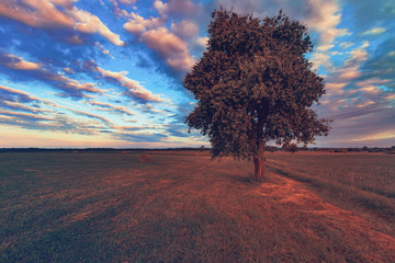Vintage field landscape in Europe, Poland. Beautiful rural sunset landscape.