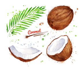 Watercolor illustration of coconut