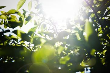 Green leavers