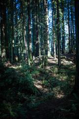 SequoiaPark_0232