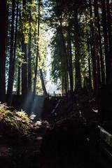 SequoiaPark_0233