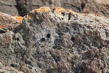 Stein mit Spinnen