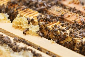 Несколько пчел поедают остатки меда из сот в улье