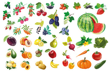 Berries, fruits and vegetables large collection Wall mural