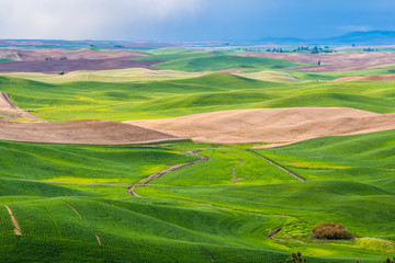 Poster Hill Amazing green hills. Plowed fields, an incredible drawing of the earth. Steptoe Butte State Park, Eastern Washington, in the northwest United States.