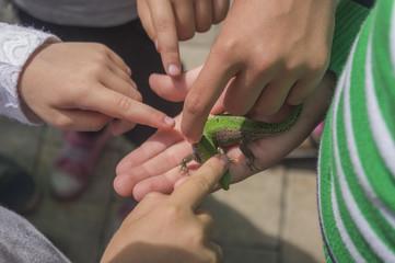 Children study a small lizard